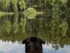 Psí hotel- Betty u jezera